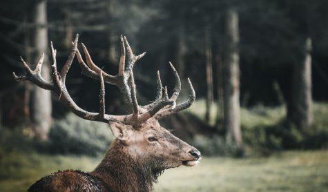 BPO Elks Lodge No. 319 (Due: 4/1/19)