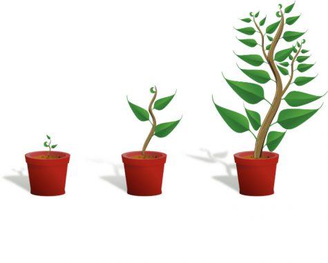 Growth written by junior Nyla Estefany