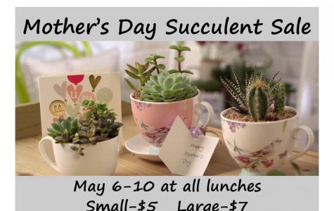 Mother's Day Succulent Sale: 5/6/19 – 5/10/19 (sold out, but more on sale during lunches on Wednesday or Thursday)