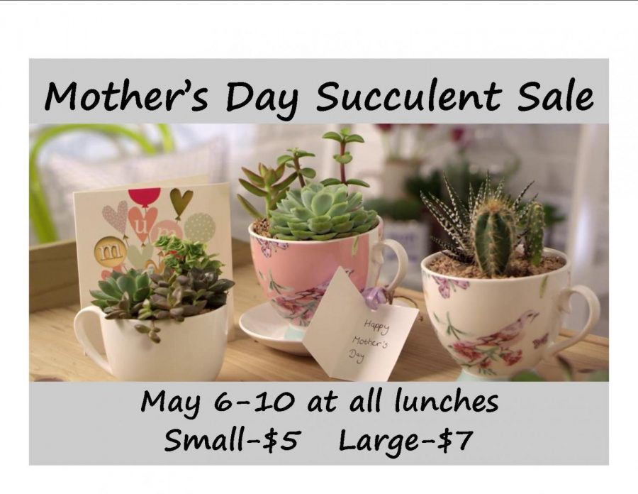 Mother's Day Succulent Sale: 5/6/19 - 5/10/19 (sold out, but more on sale during lunches on Wednesday or Thursday)