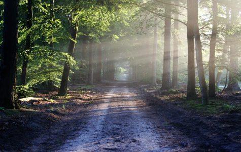 Walking Through Nature written by sophomore Mehrin Hossain