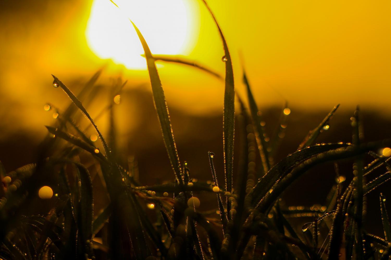 Photo via Pexels.com under the Creative Commons License