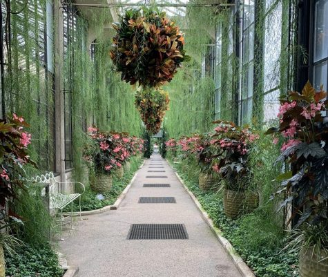 An walkway decorated with hanging flower bushes and greenery.