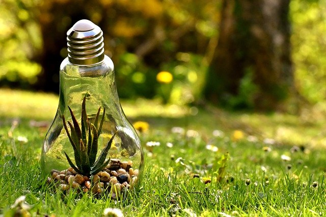 Energy Nature Light Bulb Environmental Protection.  Everyone can help save the planet.