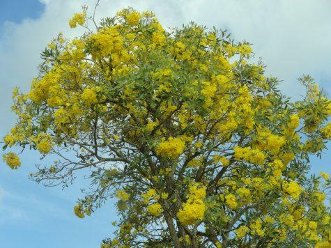 Photo of a Boricua Tree via Flickr